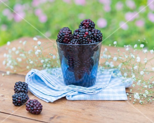 Blackberries and gypsophila on a garden table