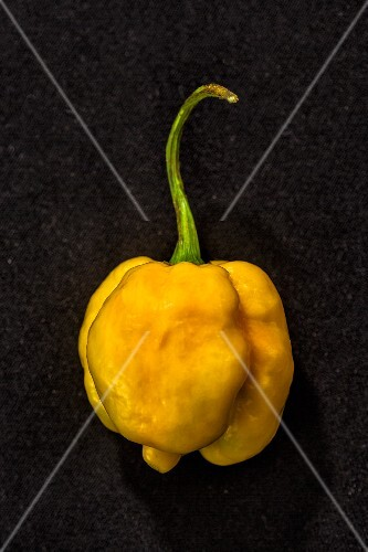 Chilli '7 Pod Yellow' (very spicy chilli pepper)