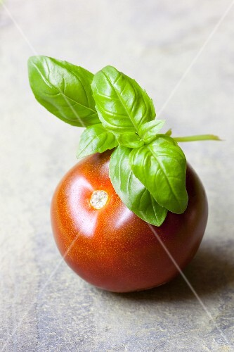 A tomato with a sprig of basil