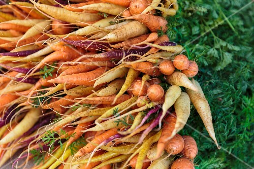 Bunches of heritage carrots at a market in San Diego, USA