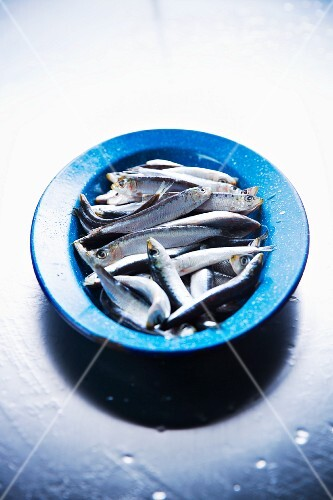 Fresh sardines in a blue bowl
