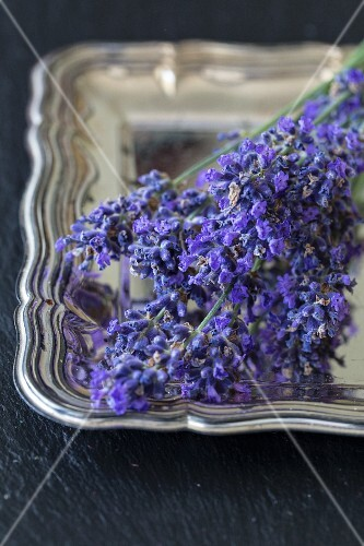 Lavender flowers on a silver tray