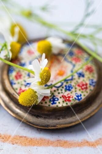 Chamomile flowers on the lid of an old pill tin