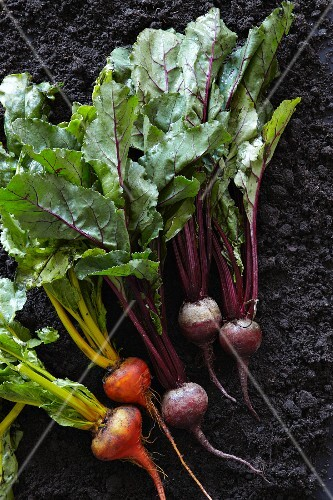 Various types of beetroot (seen from above)