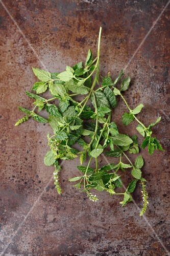 Fresh sprigs of mint on a metal surface