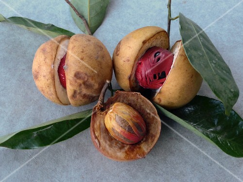Nutmeg seeds with fruits and mace
