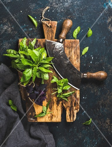 Fresh green and purple basil leaves with herb chopper knife on rustic cutting board