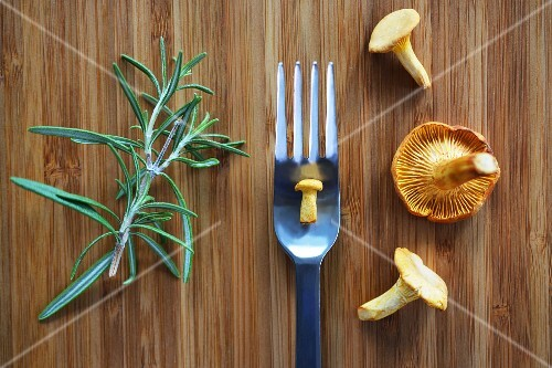 Fresh chanterelle mushrooms and rosemary on a wooden board with a small mushroom on a fork