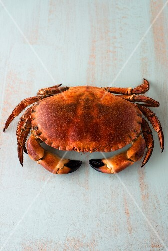 A whole boiled crab
