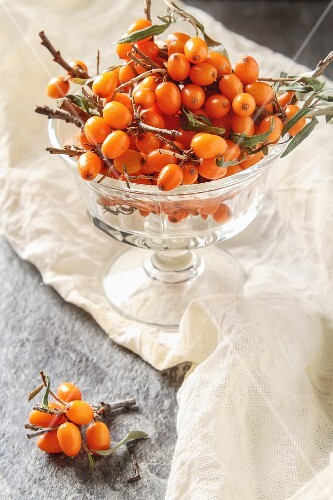 Fresh sea buckthorn berries with twigs in a glass bowl