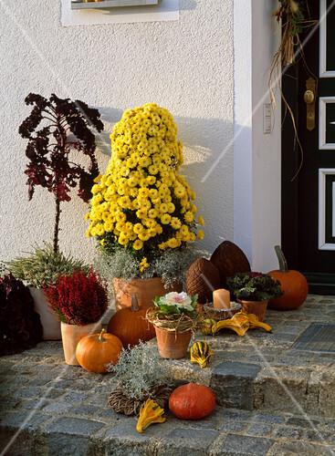 deko vor der haust r chrysanthemum pyramide bild. Black Bedroom Furniture Sets. Home Design Ideas