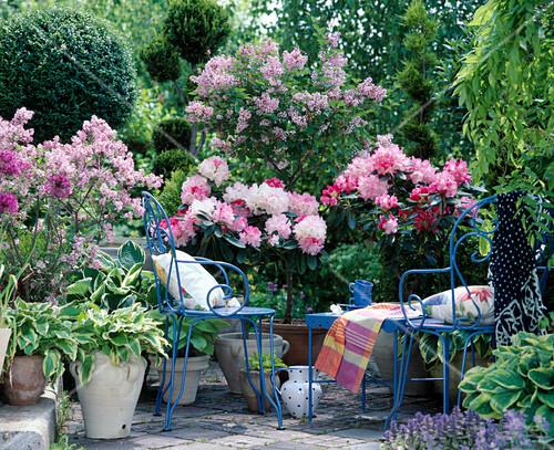 rhododendron hybr bild kaufen friedrich strauss. Black Bedroom Furniture Sets. Home Design Ideas