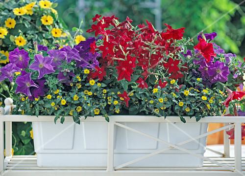 blumenkasten bepflanzen 6 6 bild kaufen friedrich. Black Bedroom Furniture Sets. Home Design Ideas