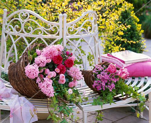 hyacinthus rosa hyazinthen bellis tausendsch n bild. Black Bedroom Furniture Sets. Home Design Ideas