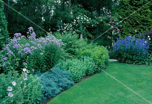 ppig bepflanzte staudenbeete und englischer rasen in garten bild kaufen friedrich strauss. Black Bedroom Furniture Sets. Home Design Ideas