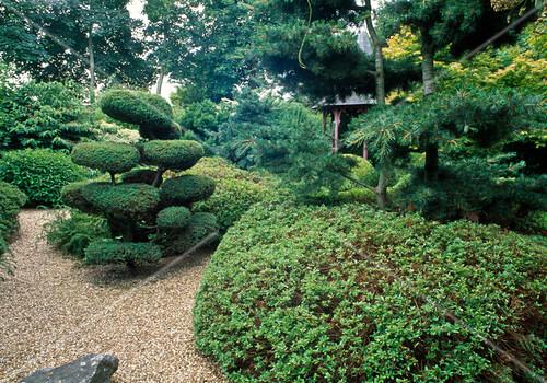 japanischer garten mit juniperus wacholder formschnitt. Black Bedroom Furniture Sets. Home Design Ideas