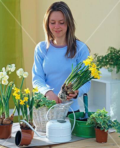 wei en korb mit narzissen und efeu bepflanzen 1 3 bild kaufen friedrich strauss. Black Bedroom Furniture Sets. Home Design Ideas