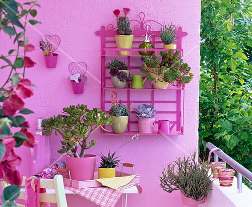 balkon f r faule sukkulenten und kaktus in kleinen t pfen bild kaufen friedrich strauss. Black Bedroom Furniture Sets. Home Design Ideas