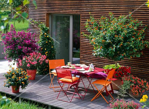lantana wandelr schen bougainvillea nerium oleander bild kaufen friedrich strauss. Black Bedroom Furniture Sets. Home Design Ideas