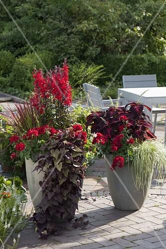 Kübel Bepflanzen hohe graue kübel mit roter bepflanzung bild kaufen friedrich