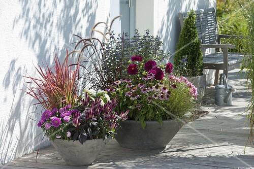spaetsommerlich bepflanzte schalen am hauseingang bild kaufen friedrich strauss