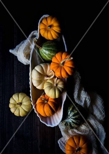 A collection of multi-colored petite pumpkins and gourds in a bowl