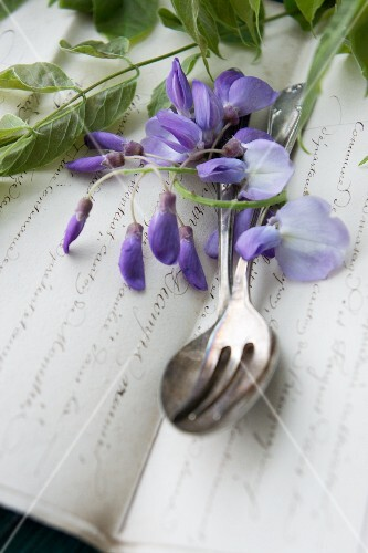 Wisteria panicles and cutlery on an Old English notebook