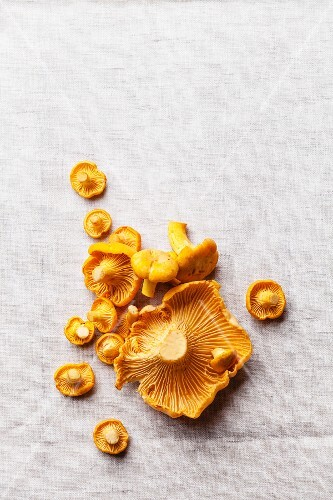 Raw wild mushrooms chanterelle on light textile background