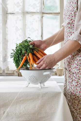 Bundle of fresh young carrots with green haulm under colander in female hands