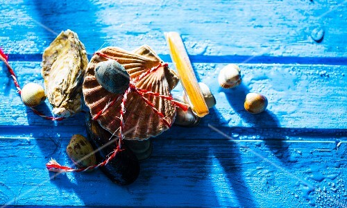 Fresh mussels on a blue wooden background
