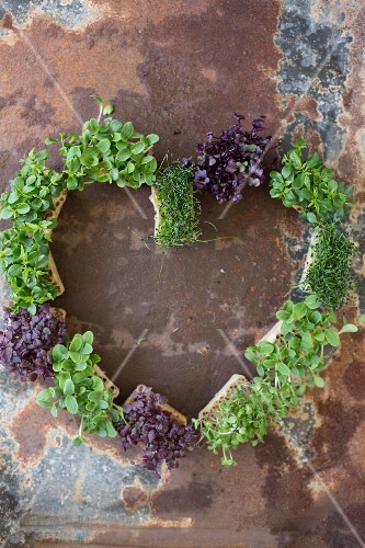 Different cress varieties arranged in a heart