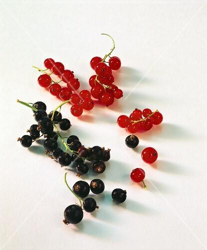 schwarze und rote johannisbeeren bild kaufen 233873. Black Bedroom Furniture Sets. Home Design Ideas