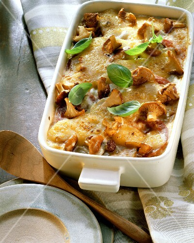 Potato lasagne with chanterelles