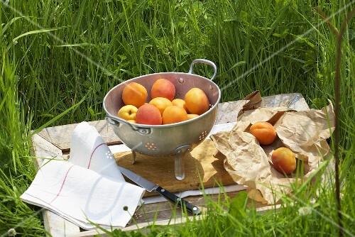 Apricots on wooden tray in grass