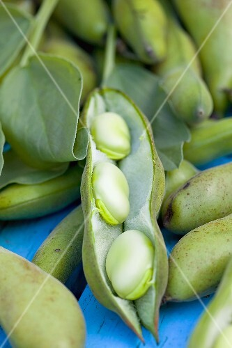 Broad beans: beans and pods