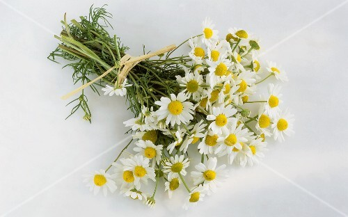 A bunch of chamomile