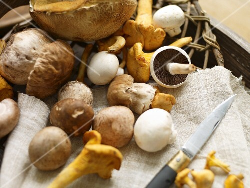 Porcini mushrooms, chanterelle mushrooms and button mushrooms with a knife on a towel