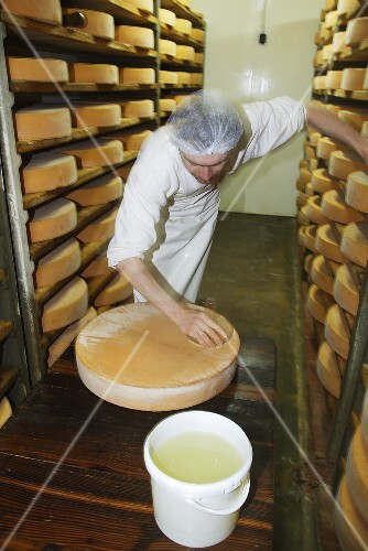 Cheese-maker brushing a cheese