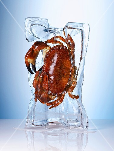 Cooked crab frozen in a block of ice