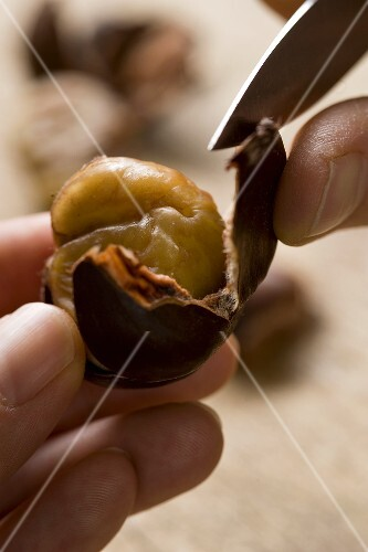 A chestnut being peeled