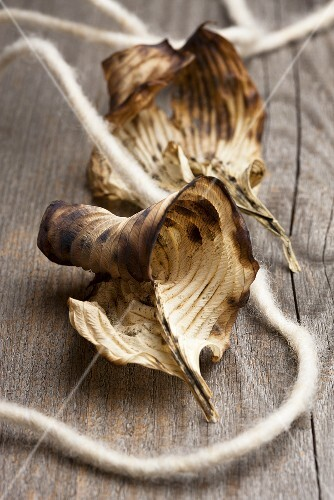 Two dried hosta leaves with a piece of felt string on a wooden surface