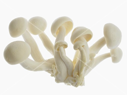White shimejei mushrooms