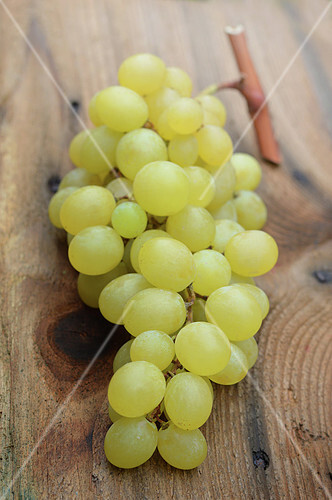 Bunch of Italian white grapes