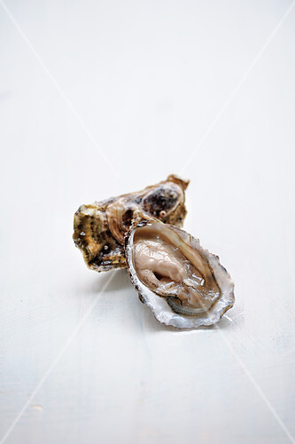 Oysters on a white background