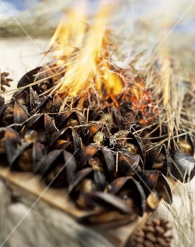 eclade de moules unter brennenden kiefernnadeln gegrillte miesmuscheln ile d 39 oleron stockfood. Black Bedroom Furniture Sets. Home Design Ideas