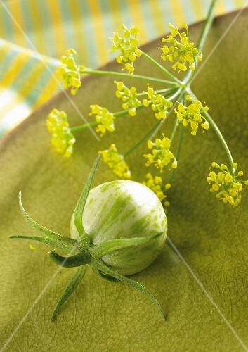 Fennel flowers and a green zebra tomato