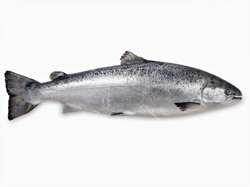 Whole raw salmon