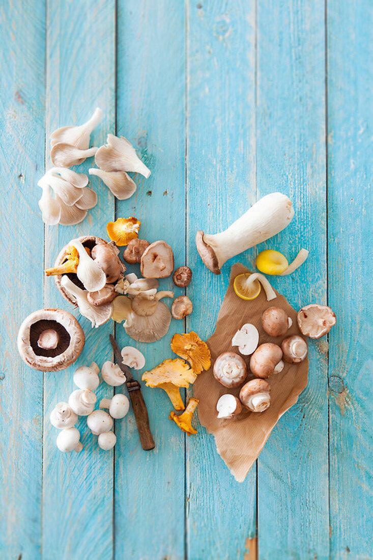 Mushrooms Mundane