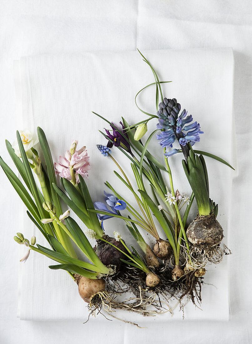 Spring Bulb Celebration