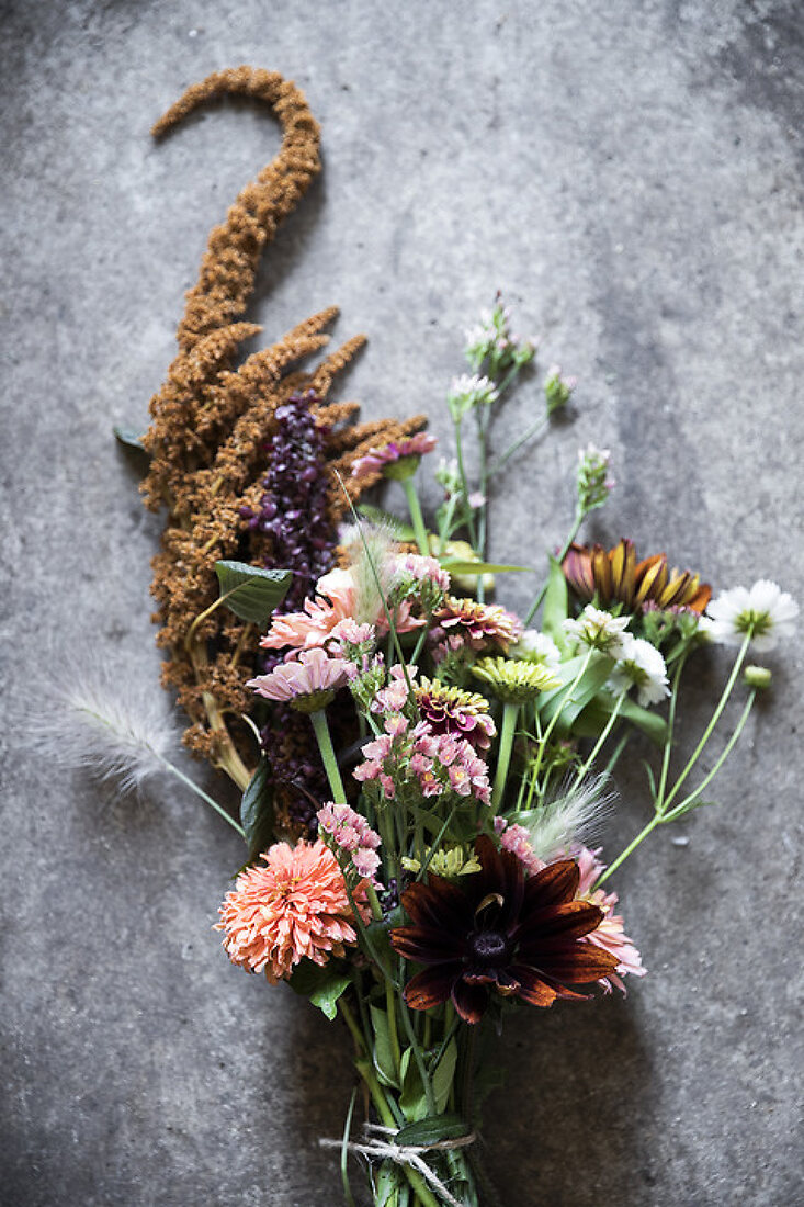 Ecological Grown Flowers in Full Bloom
